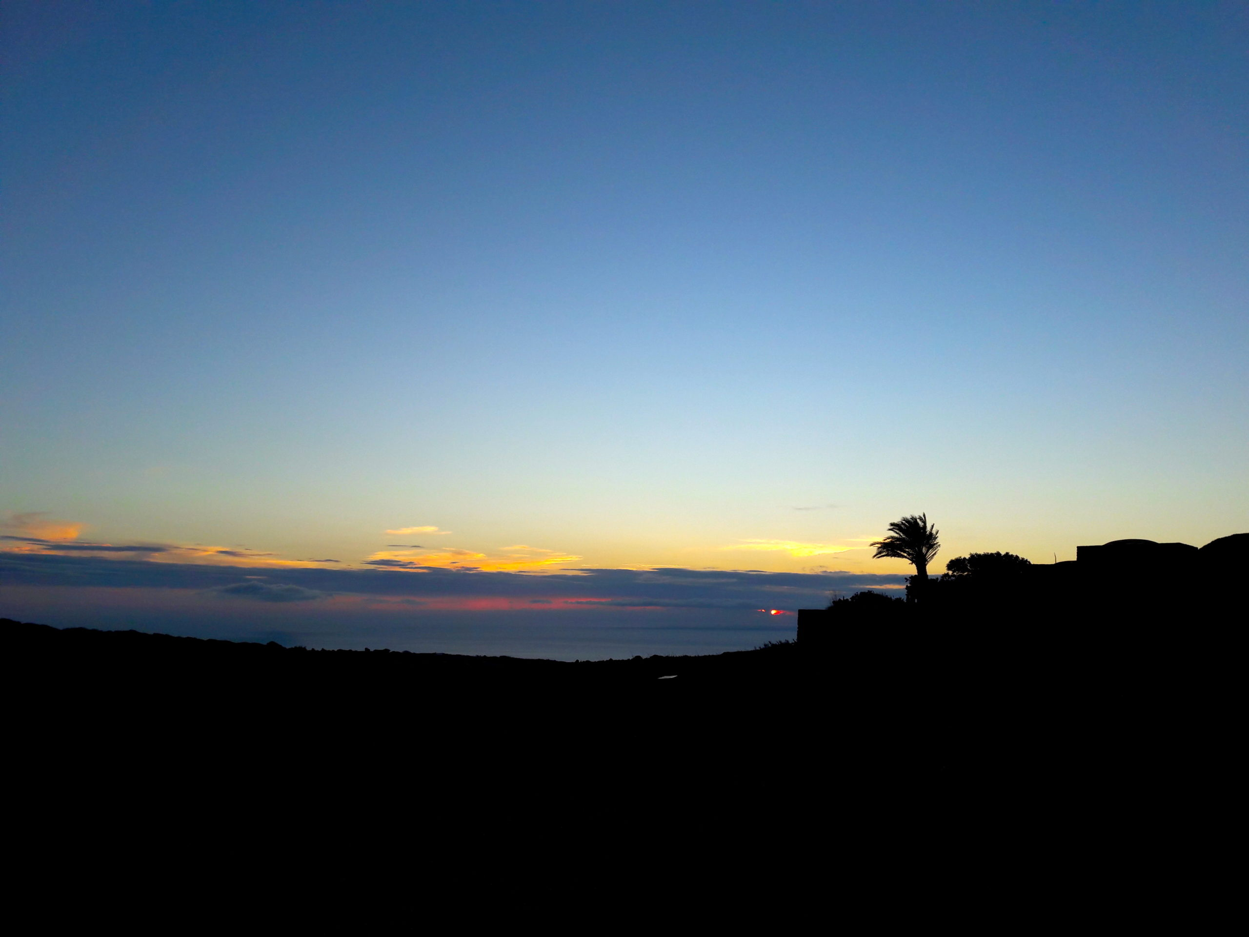 Pantelleria palma